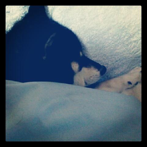 コロナも寝るんであります。