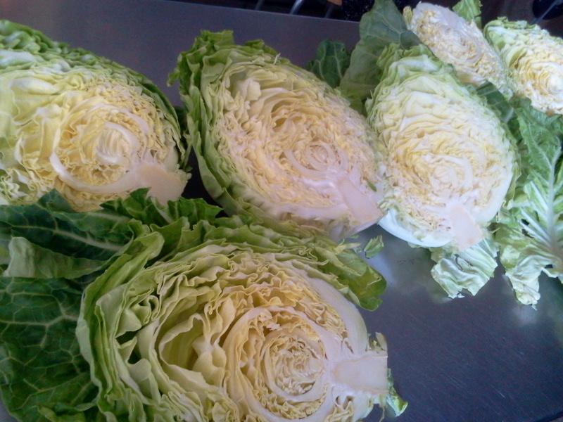 山田町から野菜がとどいたよ!