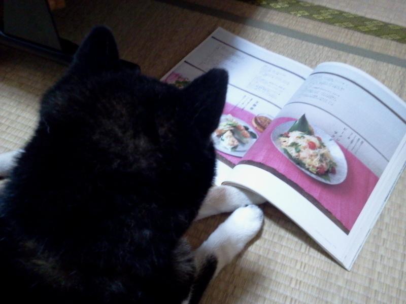 雑誌を読む黒柴犬。
