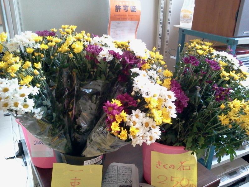 菊の花 250円で販売中!いなかフェにて