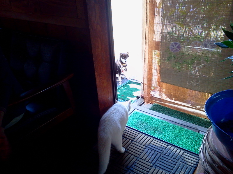 銘木と猫とコロナ