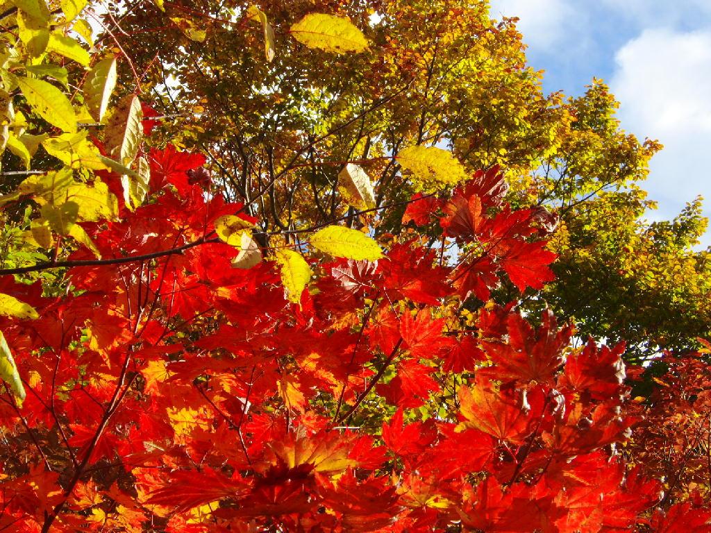 鳥海山 紅葉が深まってきました