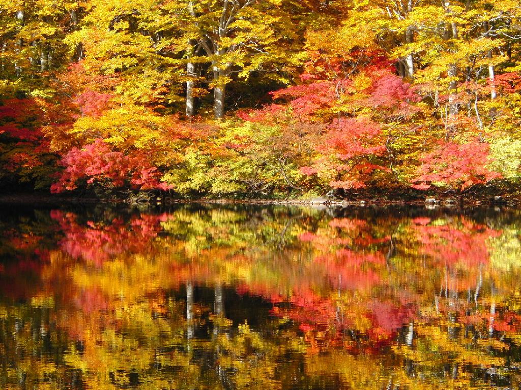 2012年10月27日の鶴間池など
