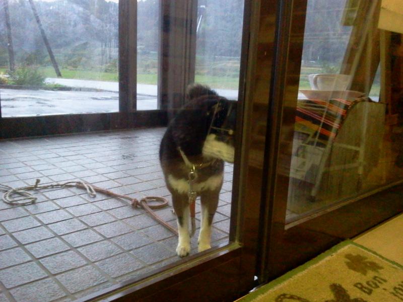 玄関開けてくださいな。