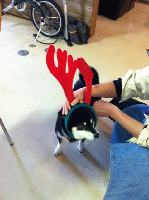 はやめのクリスマス気分に浸る黒柴犬の傾向と対策について。
