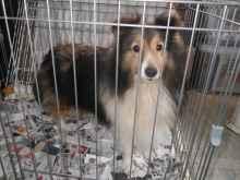 緊急事態発生中!庄内にて犬18頭放置、支援願います!