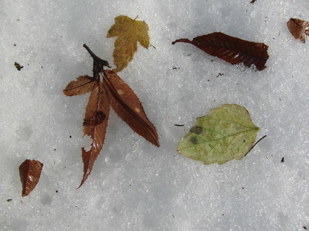 鳥さんと落ち葉。