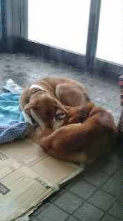 いなかフェで犬二頭保護しました。