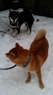 散歩前の落ち着きのない御二方。