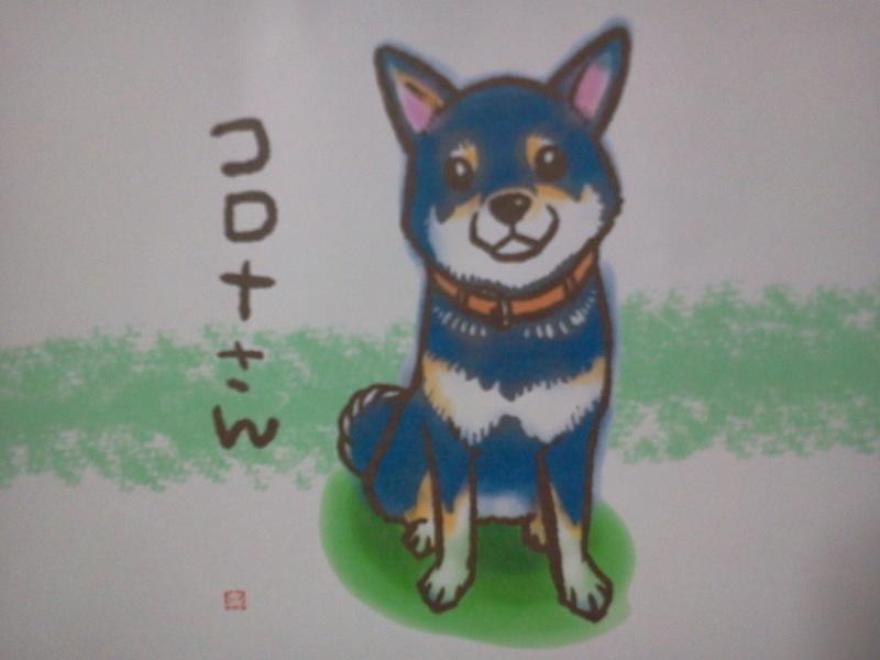 柴犬カレンダーを頂いてしまった。かわいい!