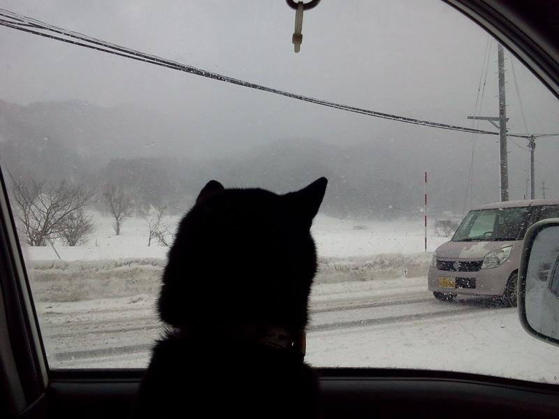 いなかフェ周辺は吹雪なのだったー