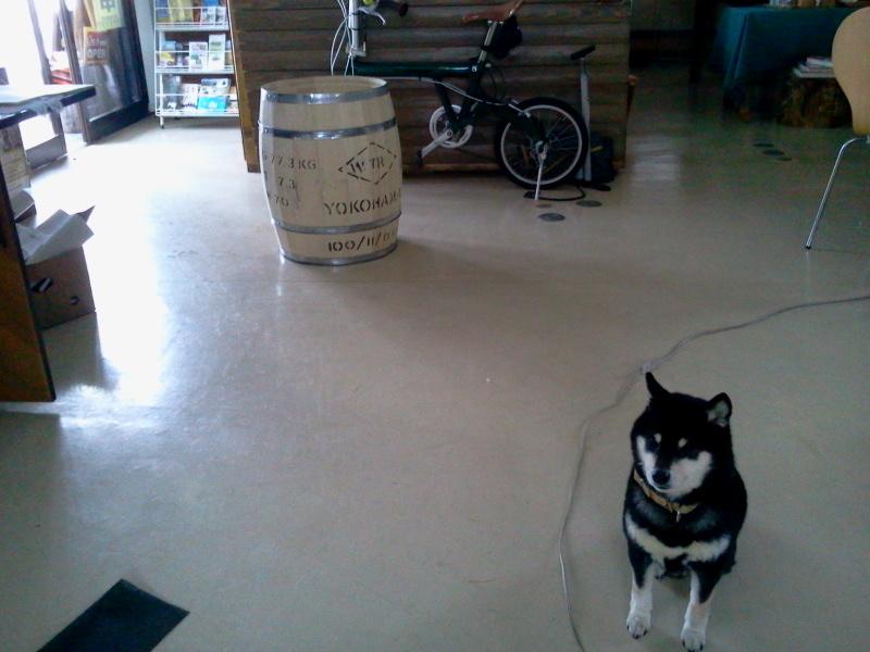 合羽橋で買ったブルマンの樽が届く。