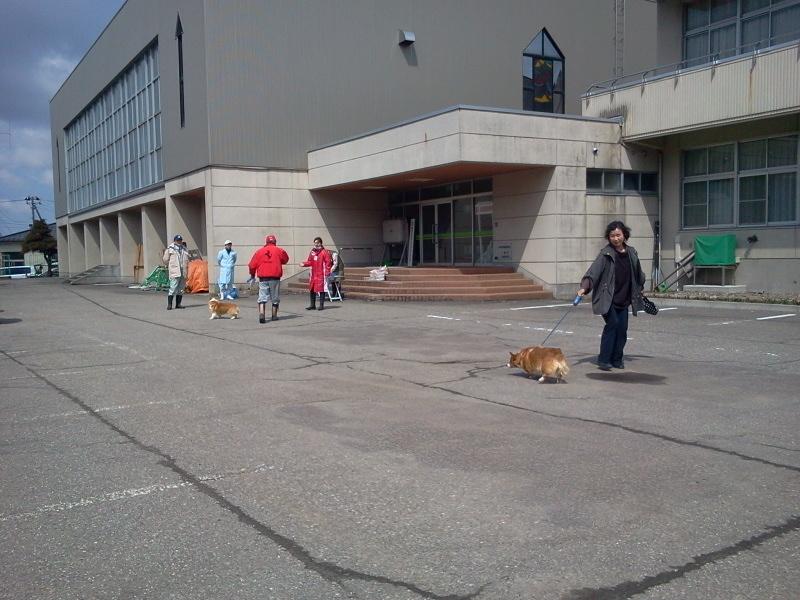 日向小学校で狂犬病注射チックん。