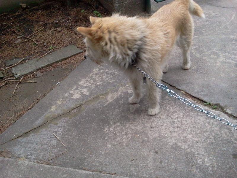 八幡の観音寺で犬を保護しました。