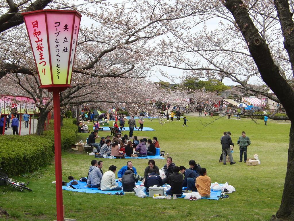 2013/4/20の酒田市日和山公園の桜祭り