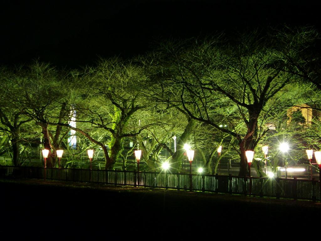 夜桜の写真が届きました。