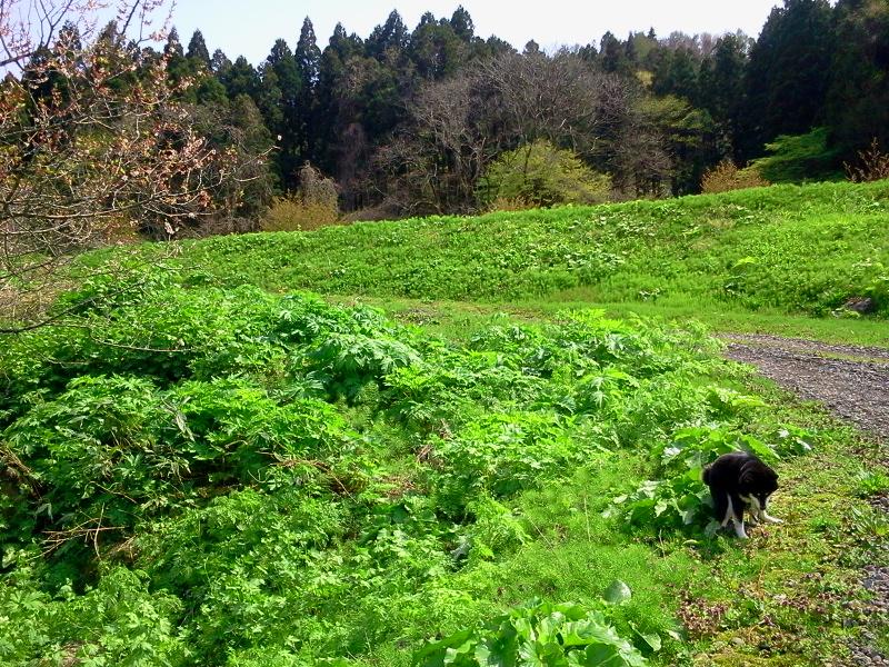 いなかフェ周辺の風景 緑がいっぱい