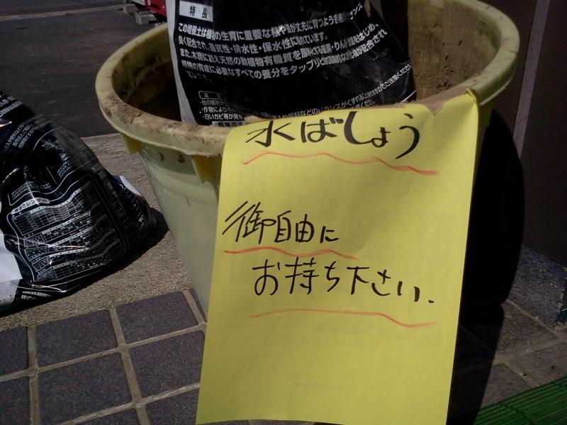 水芭蕉 ご自由にお持ちください。
