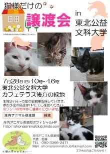 7/28は酒田市公益文科大学にて猫様だけの譲渡会!