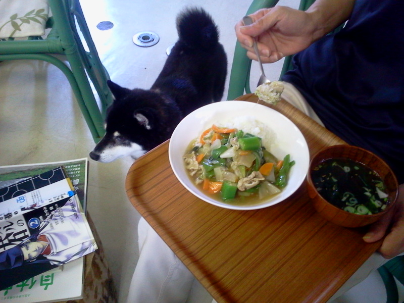今日の賄い飯は庄内野菜いっぱいの中華丼でした。